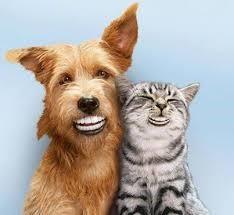 Paravet, de totaaloplossing voor je huisdieren.