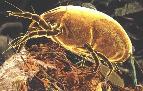 Een allergie voor huisstofmijt veroorzaakt een kriebelende neus, niezen en rode, jeukende ogen.