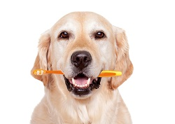 Honden zijn sociale dieren en hebben behoefte aan zorg en aandacht.